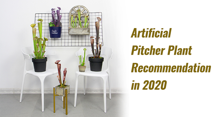 Artificial Pitcher Plant Recommendation in 2020