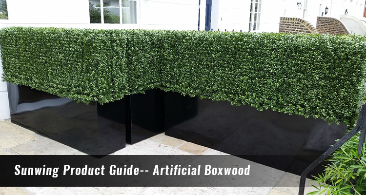 sunwing product guide--artificial boxwood